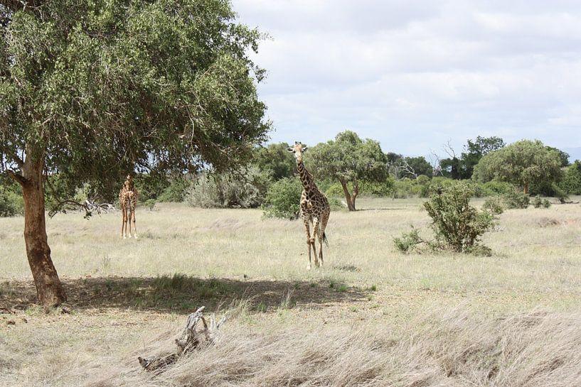 Giraf van Gilian Fijen