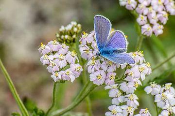 Blau von Henk bohmers