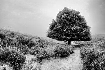 A tree van