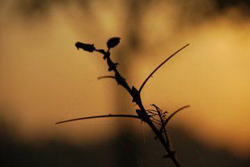 Filiale in der Morgensonne von T. Berrevoet