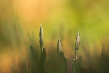 Herzlich willkommen im Frühling von Birgitte Bergman