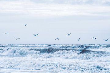 Les mouettes sur le surf sur Florian Kunde