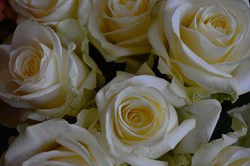 Witte rozen boeket von Ima Rhebok