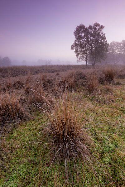 Strabrechtse Heide 264 van Desh amer