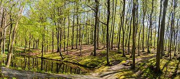 Buchenwald am Hochufer bei Lietzow von GH Foto & Artdesign