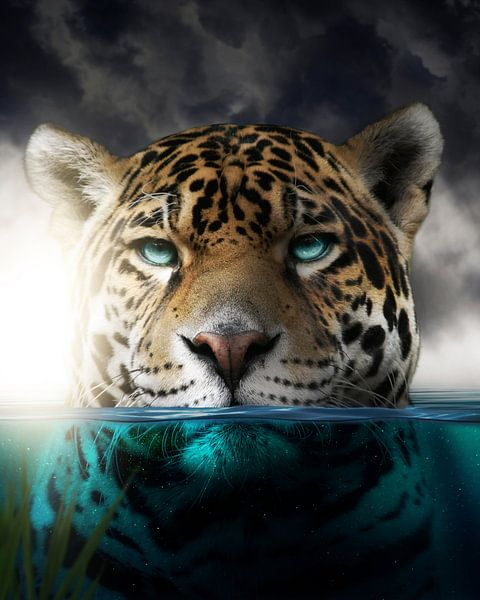 Een luipaard in het water van Bert Hooijer