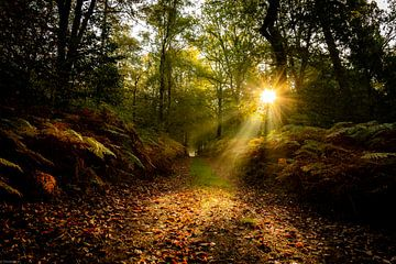 Sonnenstrahlen von Arjen Uijttenboogaart