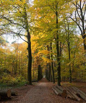Herbstlicher Wald von John de Ruiter