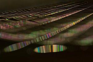True colours (spinnenweb in het zonlicht) van Marianne Jonkman