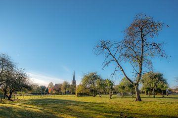 Kerk Maurik in het zonnetje van Moetwil en van Dijk - Fotografie