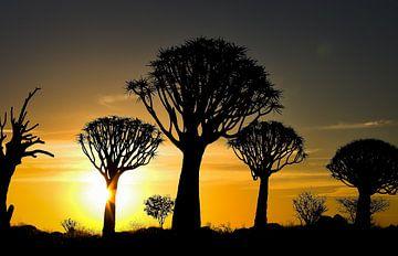 kokerboom van Ed Dorrestein