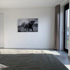 Photo de nos clients: Schotse Hooglander zwart/wit sur Frank Slaghuis