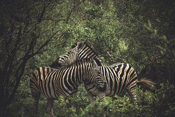 Zebras. von Niels Jaeqx