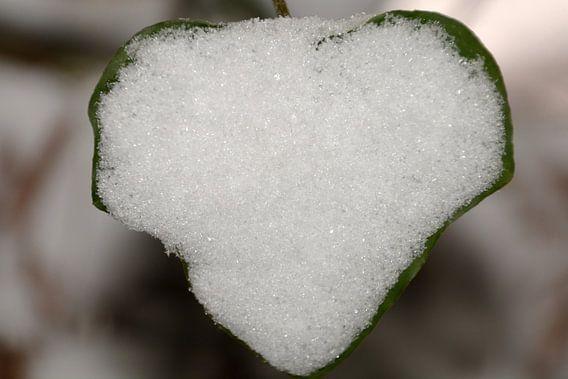 Sneeuwhart 2