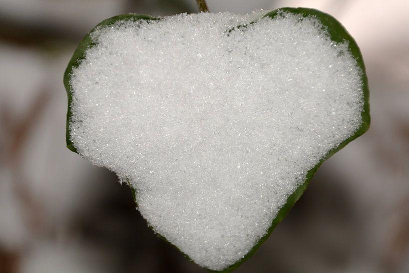 Sneeuwhart 2 van FotoGraaG Hanneke