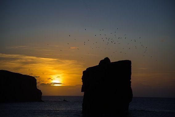 Azoren sunset aan de zee met meeuwen