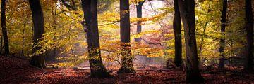 Morgenlicht im Wald von Edwin Mooijaart