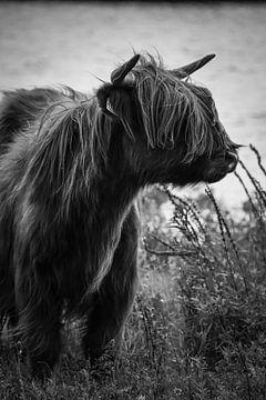 Schottischer Highlander schwarz-weiß von Milou Hinssen