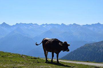 Koe in de bergen von Gerdine Aret