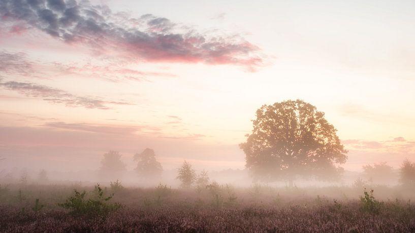 Morning fog van Lex Schulte