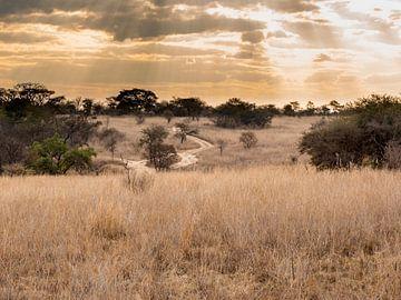 De zon schijnt door de wolken op het landschap in antelope park zimbabwe van victor van bochove