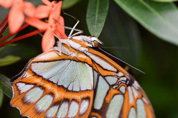 Close-up va een mooie oranje vlinder met veel details van Kim de Been