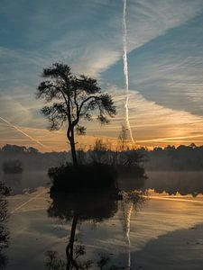 Magical morning I van Diane van Veen