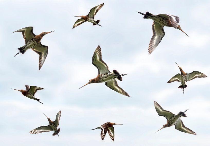 Fliegenden Godwits von Marcel van Balken