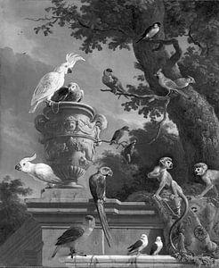 De menagerie in zwart wit , Melchior d'Hondecoeter van