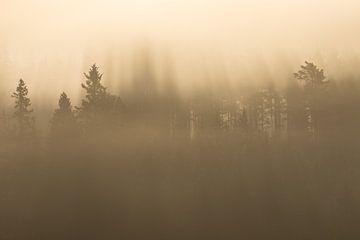 Ochtendmagie in het Zweedse bos van Mindy Molein