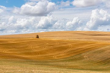 Gemaaid graanveld met strobalen van