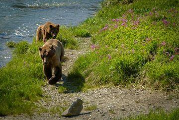 Grizzly moederbeer met jong lopend langs de rivier, Alaska van Rietje Bulthuis