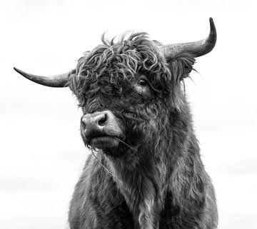Porträt Schottischer Hochlandbewohner schwarz-weiß von Ans Bastiaanssen