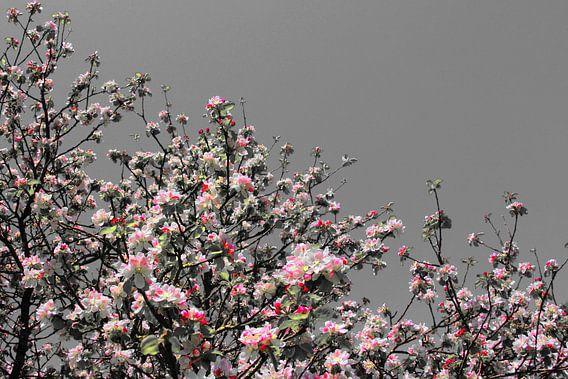 pink blossom van Yvonne Blokland