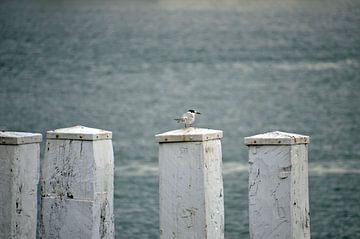 Überwachung der Nordsee von Gwen Laremans
