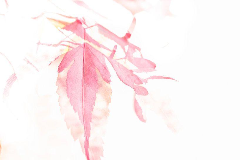 Aquarell Japanischer Ahorn von Erna Böhre
