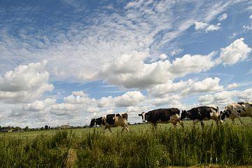 Koeien lopen weer naar de stal von Willie Kamminga