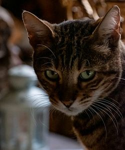 De kat van het Velootje
