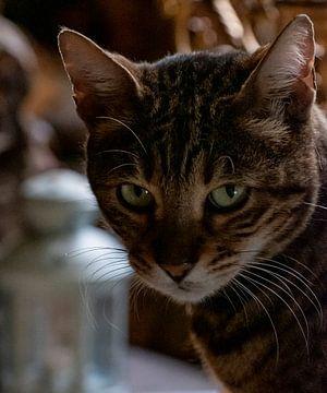 De kat van het Velootje van Sense Photography