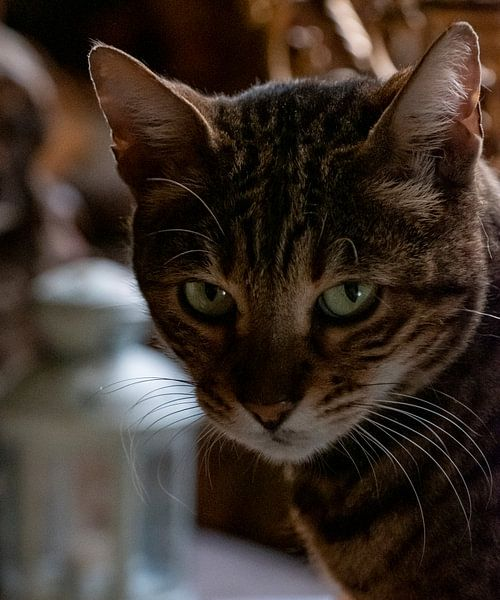 De kat van het Velootje von Sense Photography