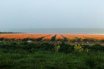 Orange oben von Jan Tuns