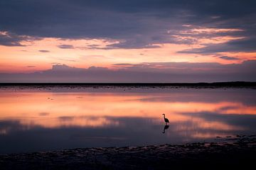 Sonnenuntergang über dem Watt bei Schiermonnikoog von Steven Boelaars