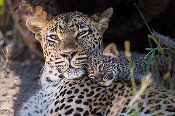 Leopardenjunges kuschelt mit der Mutter von Jos van Bommel