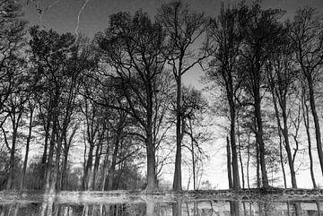 Bomen weerspiegeld in het water, geroteerd, zwart wit van Bianca ter Riet