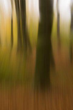heksen bos van Francois Debets
