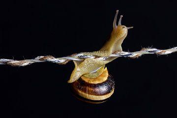 Un escargot curieux lance des signaux d'alarme sur Besa Art
