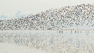 Vogeltrek