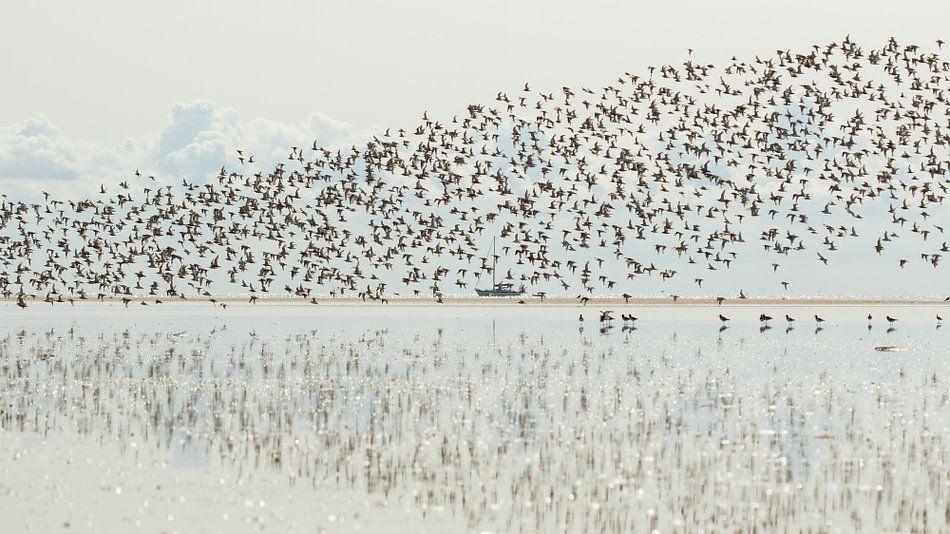 Vogeltrek van Art Wittingen