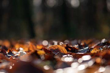zonnig herfsttapijt van Tania Perneel