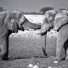 câlin d'éléphant sur Fotografie Egmond